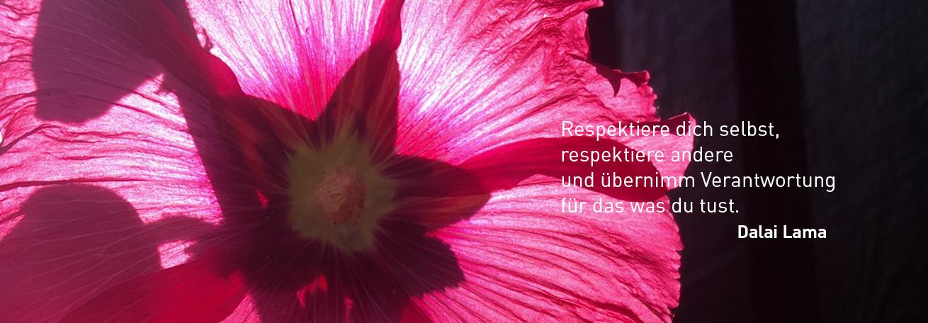 Blüte mit Zitat Dalai Lama
